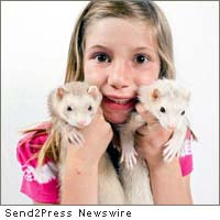 ferrets anonymous
